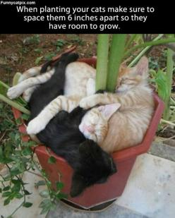 When Planting Cats: Animals, Stuff, Pet, Funny, Kittens, Planting Cats, Kitty, Garden