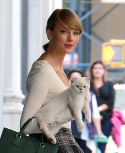 Which Of Taylor Swift's Cats Are You?  OLIVIA BENSEN  boom i was in a music vid so....: Olivia Benson, Taylorswift, Taylor Swifts Cat, Swift S Cats, Taylor Swift Cat, Favorite Singer, Taylor Swift Quiz