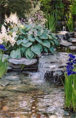 White astilbe (Bridal Veil?) big blue hosta and Siberian Iris Caesar's Brother along a stream bed. Gorgeous.: Water Gardens, Backyard Waterfalls, Water Features, Pond Waterfall, Lawn Pond, Garden Waterfalls, Ponds Waterfall, Watergarden