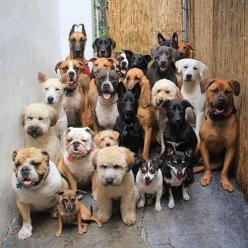 who let the dogs out??: Animals, Dogs, Doggies, Pets, Puppy, Photo, Friend