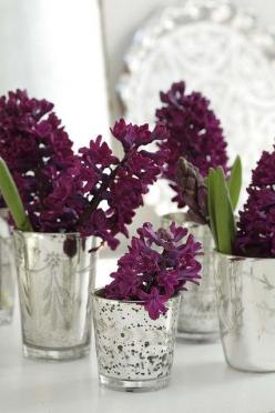 Wine colored hyacinth blooms in silver glasses - so pretty #flowers #spring #bulbs: Glasses, Purple, Wedding Ideas, Mercury Glass, Color, Flowers, Hyacinth, Garden