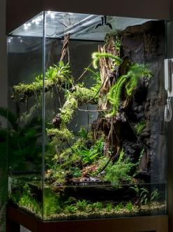 With water - absolutely obsessed: Aquarium Terrarium, Terrariums Aquariums, Living Room, Vivarium Terrarium, Aquascape, Tank, Photo