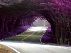 would love for this beauty to adorn my driveway...  Tunnel of Trees @ Hwy 1, California: Favorite Places, Purple, Nature, Treetunnel, Beautiful, Trees, Tree Tunnel, Photo, Roads