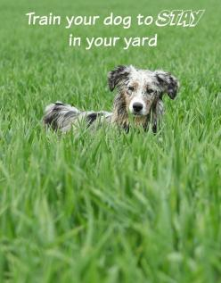 Wouldn't it be nice to know that your dog will stay in your yard instead of roaming? Our dog training tips may be able to help! A fence or other containment system can ensure your dog stays confined to a specific area, but that may not always be feasi