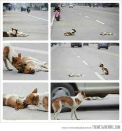 Wow this is amazing ! Love animals!: Amazing, Animals, Dogs, Friends, Cars, My Heart, So Sad, Friend Died