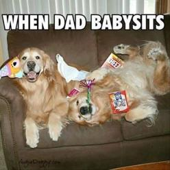 You get to do what you want, no rules! #dogs #pets #GoldenRetrievers Facebook.com/sodoggonefunny: Funny Animals, Funny Golden, Funny Dogs, Golden Retrievers, Funny Pictures, Pets, Funnies, Dad Babysits, Dads
