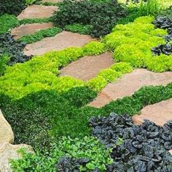 10 Ways to Keep Off the Grass - Bob Vila: Lawn Alternative, Ground Cover Plants, Front Yard, Ground Covers, Ground Covering, Landscape Idea, Grass Alternative
