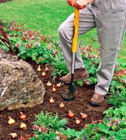 15 Tips for Planting Your Favorite Bulbs    Fill your garden with beautiful bulbs that bloom in spring, summer, and fall. Use these tips to ensure success.: Beautiful Bulbs, Favorite Bulbs, Spring Summer, Bulbs Fill, Bulb Planting