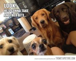 """""""Are you going to eat the whole thing?""""...... This is absolutely the story of my life.: Funny Animals, Dogs, Pet, Funny Stuff, Humor, Funnies, Chihuahua"""