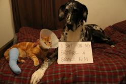 """I sat on my brother and broke him."" -dogshame.tumblr.com: Cat, Animals, Dog Shaming, Funny, Poor Kitty, Pet Shaming"