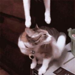 9 Cats Being Mean to Their Furry Siblings – Meowingtons: Spiderman Kiss, A Kiss, Animals, Gif S, Funny Cats, Pet, Spidercat Kisses, Kitty Kisses