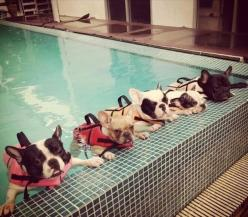 a group of french bulldogs learning how to swim... aka amazing: Doggie, Swimming Lessons, Animals, French Bulldogs, Pets, Frenchbulldog, Puppy