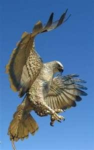A handsome fellow like this, with a windspan of close to three feet, just landed on my 7th floor balcony.  My theory is that he's a Buddhist hawk, attracted by the Tibetan prayer flags fluttering in the wind.: Search, Wings, Prey, Beautiful Birds, Ani