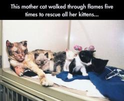 A kitty hero! Show her respect please.: Cats, Flames, Animals, Cat Walks, Mothers, Kittens, Fire