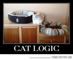 A million comfy places to sleep but I want to lay on something hard: Funny Cat Logic Beds, Funnycat Funnycats, Catlady, Pet, Crazy Cat, Dog, Animal, Cat Lady