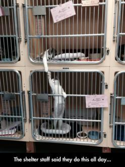 "A pinner wrote: ""funny-kitten-cage-touching-paws""  Personally, I don't think this is funny. I think it is sad. Poor kitties.... ADOPT DON'T SHOP!: Cats, Animals, Friends, Sweet, Pet, Shelters, Funny, Shelter Staff, Kitty"