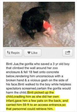 Amazing: Awww, Gorillas Restored, Animals, Sweet, Heart, Humanity Restored, Faith Restored