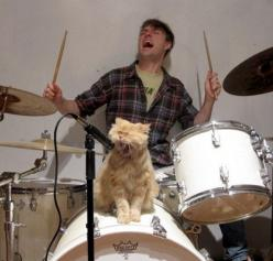 …and a frontman who can really wail. | The Life Cycle Of A Band, As Told ByCats: Cats, Animals, Crazy Cat, Funny Stuff, Funnies, Rocks, Kitty, Cat Lady
