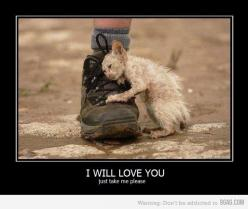 #animals #adopt #cats #dogs #puppies #kittens #shelters #awareness #abuse #animalawareness #homeless #pets #foster #homes: Cat, Pet, Heart Ache, My Heart, Poor Kitty, Baby, I Will, So Sad, Animal