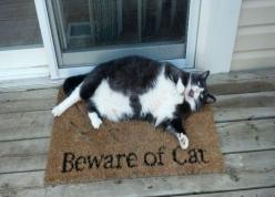 As I was entering my friends house - Imgur: Animals, Funny Stuff, Funnies, Fat Cats, Beware, Kitty, Cat Lady