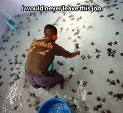 at first i thought they were spiders and i was like NOPE but then i realized they were baby sea turtles and i was like NEVERMIND YES PLEASE: Babies, Bucket List, Animals, Dream Job, Best Jobs, Funny, Things, Baby Turtles, Baby Sea Turtles