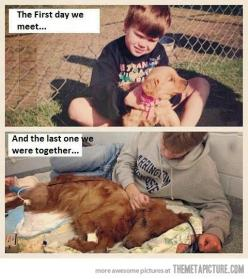 Aww :'(: Picture, Animals, Heart, Dogs, Best Friends, Sweet, Pet, Things, So Sad