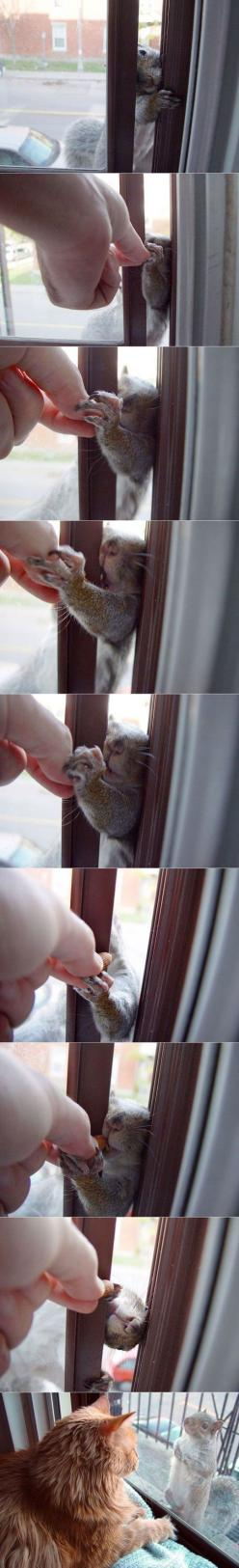 aww:): Animals, Critter, Boo Cat, Funny Cats, Pet, Squirrels Chipmunks, Squirrel Friend, Funny Squirrel Nuts Window