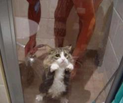 Aww! :(: Cats, Face, Animals, Funny, Poor Kitty, Shower, Funnies