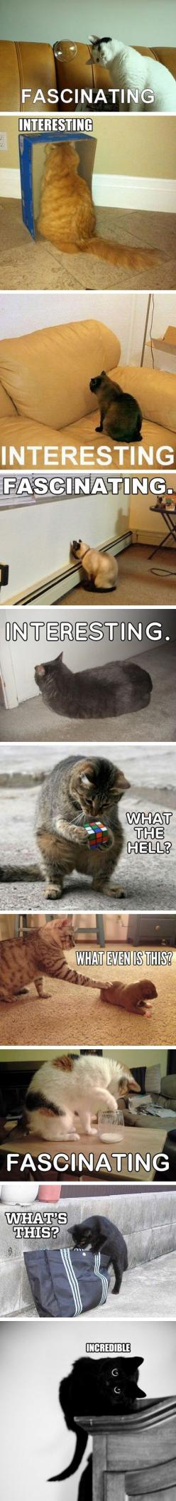 AWW: Funny Animals, Kitty Cats, Kitten, Funny Cats, Curious Cats, Crazy Cat, Easily Amazed, Cat Lady