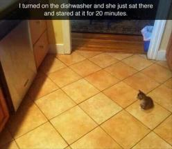 Awww. He is so tiny.: Cats, Animals, Kitten, Funny Pictures, Crazy Cat, Funnies, Dishwashers, 20 Minutes