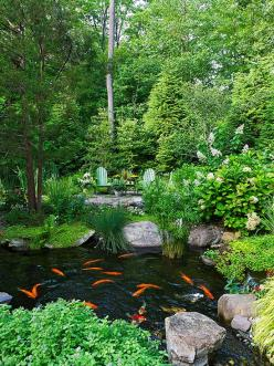 Backyard water garden with a fully stocked koi pond to provide a relaxing diversion.: Decor Ponds, Backyard Ponds, Ponds Backyard, Koi Ponds, Outdoor, Beautiful Ponds, Water Garden, Backyard Water, Flower