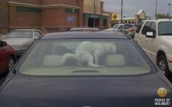Bad dog? Bad Owner?  You decide.: Dogs, Funny Shit, Cars, Funny Stuff, Funnies, Walmart, Animal