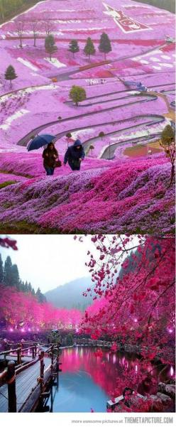 Beautiful Fields in Hillside Hokkaido, Japan >>> This is so magical. I would love to see this in real life.: Bucket List, Hillside Hokkaido, Hokkaido Japan, Beautiful Places, Places I D, Japan Flower, Magic Place, Travel, Beautiful Fields