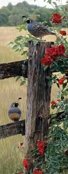 Beautiful quail: Rose, Birdie, Wooden Fence, Beautiful Birds, Animal