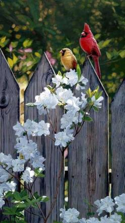 ❀ Beautiful Spring: Picture, Picket Fence, Beautiful Birds, Garden, Flower, Red Birds, Animal, Cardinals