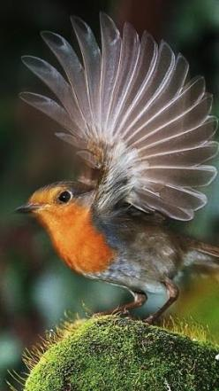 Beautiful take off!  Via A1Pictures: Animals, Birdie, Bird Wings, Beautiful Birds, Beautifulbirds, Feathers