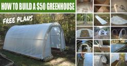 Become self-reliant! Instead of spending lots of money on pesticide laden, genetically modified veggies you … Continued: Green Houses, Diy Greenhouse, Free Plans, Greenhouse Plan, Greenhouses, Build A Greenhouse, 50 Greenhouse, Garden, How To Build