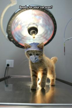 Best Hospital Ever: Kitten, Catscan, Animals, Crazy Cat, Funny Animal, Kitty, Doctor, Cat Lady