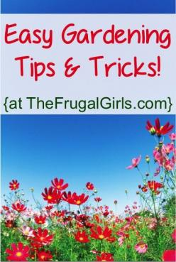BIG List of Easy Gardening Tips and Tricks!! ~ from TheFrugalGirls.com #gardening pin now read later.: Garden Ideas, Gardening Ideas, Garden Tips, Thefrugalgirls With, Tips And Tricks, Garden Plants