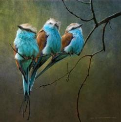 #birds    awww ღ♥ღ: Racquet Tailed, Animals, Tailed Rollers, Art, Beautiful Birds, Christopher Vest, Blue Birds, Photo