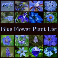 Blue Garden Plants |  For seed giveaways, daily tips and plant info, come join us on facebook! https://www.facebook.com/thegardengeeks: Blue Garden, Blue Flowers, Plant Info, Seed Giveaways, Garden Plants