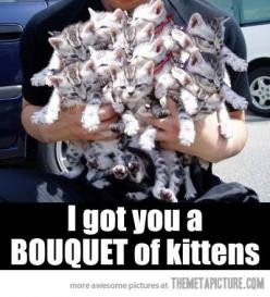 Bouquet of kittens....uh most amazing thing ever. I would be completely fine if i got that.: Cats, Animals, Funny, Bouquets, Crazy Cat, Kittens, Kitty, Cat Lady
