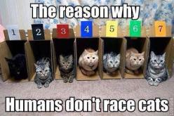 Boxes are a cats best friend!   ...........click here to find out more     http://googydog.com: Animals, Don T Race, Race Cats, Crazy Cat, Funny Stuff, Funnie, Cat Lady