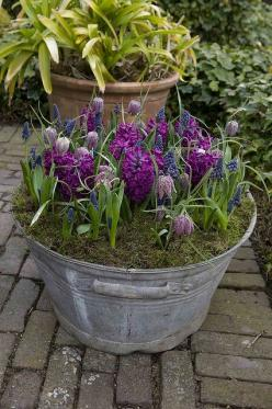Bulbs in a bucket! Old buckets filled with bulbs are a great way to recycle unused items and add color to a porch or patio. Follow Fernwood for other ideas like this one!: Garden Container, Idea, Spring Bulbs, Bucket, Washtub, Container Gardening, Flower