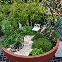Bush Gardens  Several 'bushes' line the stone path to a tea time arm chair. Sit here to watch the birds as they frolic in the Hubert frog birdbath. Plants include cuphea, Dianthus, Armeria, Nierembergia, Saxifraga paniculata, thyme. Devil's Ba