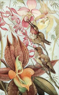 by Edward Julius Detmold...gorgeous!: Julius Detmold, Art, Illustration, Edward Julius, Nature Studies, Botanical, Nature Study, Birds, Flower