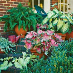Caladiums, great shade plants...      From Southern Living  82 creative container gardens: Garden Container, Container Gardens, Creative Container, Southern Living, Garden Ideas, Gardening Ideas, 82 Creative, Container Plants, Container Gardening
