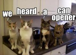Can opener?  These are our cats and some stranger put the caption and now they are famous in Pinterest! I just happened upon this! Ha!: Funny Animals, Can Opener, Funny Cats, Crazy Cat, Funny Stuff, Canopener, Kitty, Cat Lady
