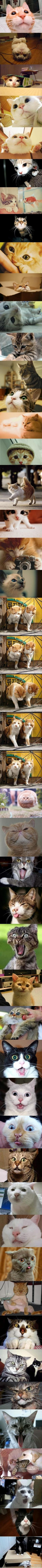 cat cat cat ...: Kitty Cats, Kitty Faces, Cats 3, Funny Cats, Crazy Cat, Cat Faces, Cat Lady, Animal