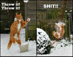 Cat catches the snowball - http://funnyout.com/cat-catches-the-snowball-2/: Cats, Throw, Animals, Funny Cat, Funny Stuff, Funnies, Humor, Funny Animal
